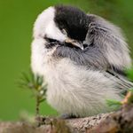 Where Do Birds Sleep At Night?