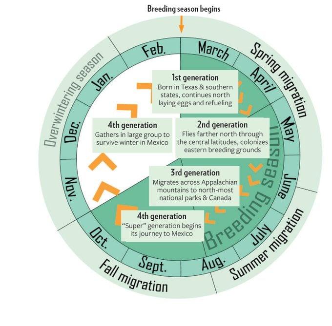 Monarch Migration Cycle