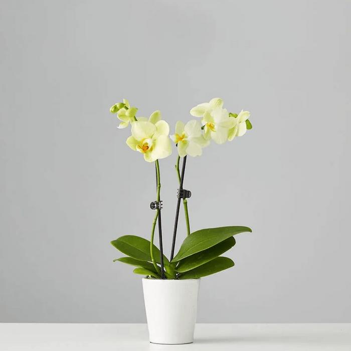 orchid, best indoor office plants