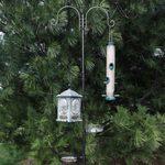 7 Best Bird Feeder Poles