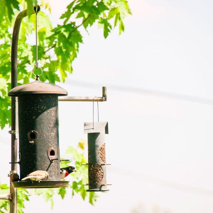 Bird Feeder Pole Gettyimages 530521313