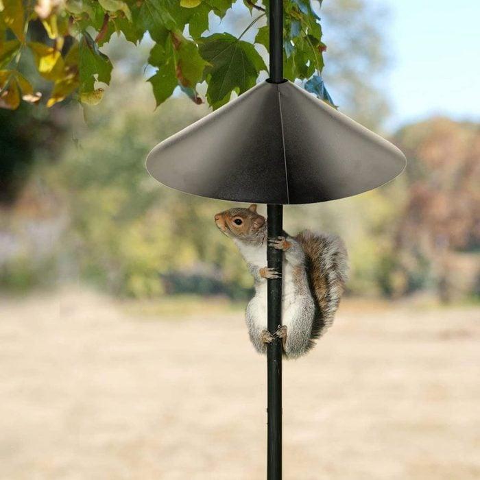 Bird Feeder Pole Squirrel Baffle 71ulsbtxcrl  Ac Sl1500