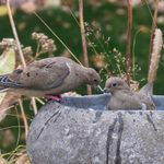 20 Best Bird Baths and Fountains for Attracting Birds
