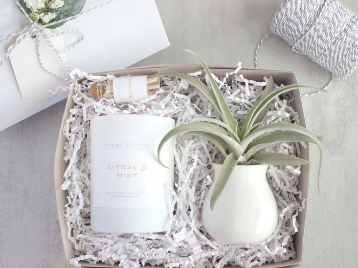 candle and air plant