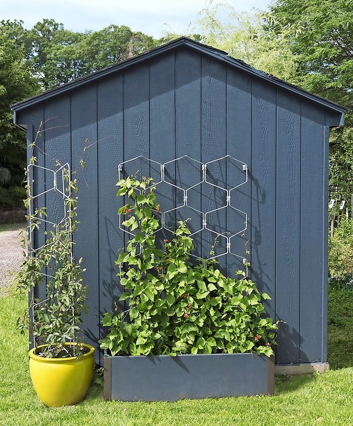 A planter with a built-in wire trellis in a hexagon pattern with a vine.