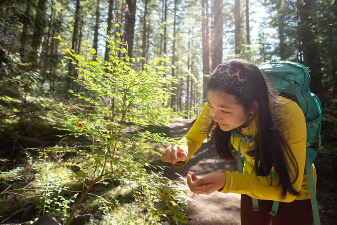 Young Woman with Backpack Picking Wild Huckleberries While Hiking