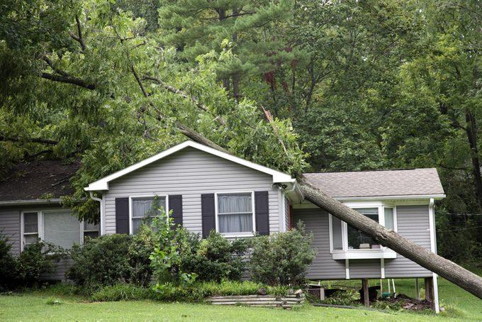 Fallen tree on top of grey bungalow house