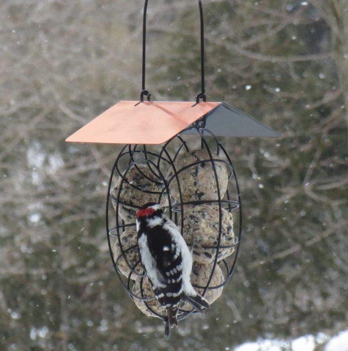 suet ball winter bird feeder