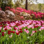 25 Secret Garden Tips We Learned From Grandma