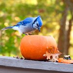 31 Photos of Autumn Birds You Need to See