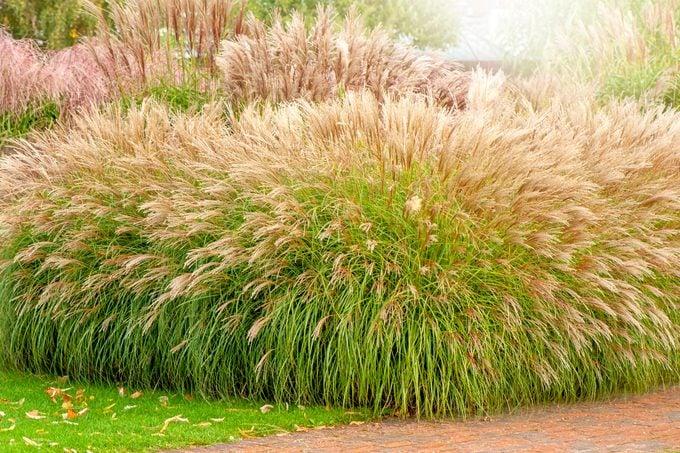 when to cut back ornamental grasses