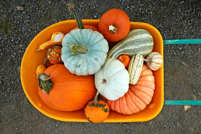 Overhead Shot Of A Variety Of Different Pumpkins And Gourds Sitting In A Wheel Barrow At A Pumpkin Patch.