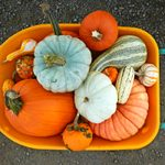 How to Grow Your Own Pumpkins and Gourds