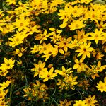 Top 10 Edging Plants for Three Seasons of Color