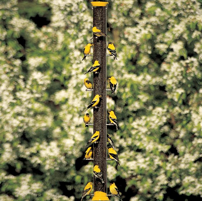 large capacity finch bird feeder