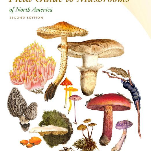 5 Best Nature Field Guides for Outdoor Explorers