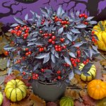 Top 10 Fall Container Plants for a Pretty Front Porch