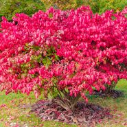 Never Plant These Invasive Shrubs (and What to Grow Instead!)