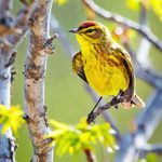 A Dose of Nature: Why Birding Will Boost Your Mental Health