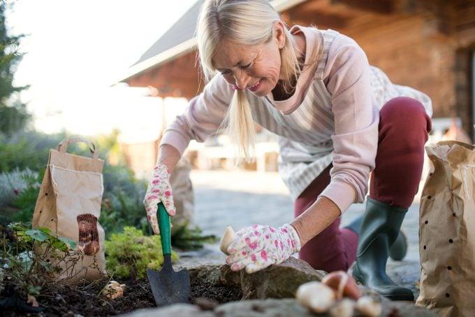 Senior woman planting bulbs outdoors in autumn garden, gardening concept.