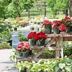 Gardening Basics: Secrets From the Garden Center