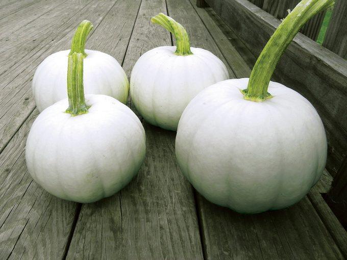 Blanco pumpkins