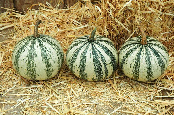 Silver Edged pumpkins