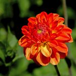 Top 10 Orange Flowers to Add a Juicy Burst of Color