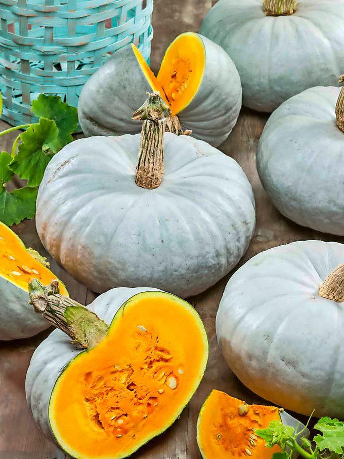 Blue Prince pumpkins